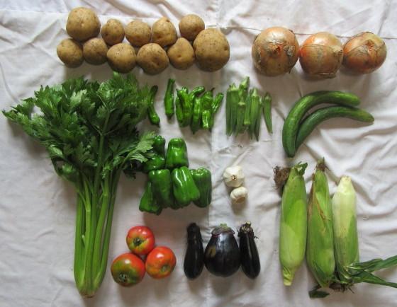 今週の産直野菜 (7月22日)